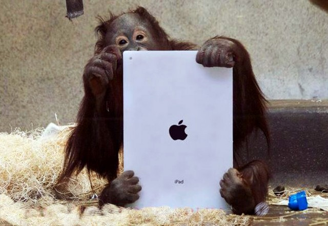 orangutan-on-ipad-1-640x441