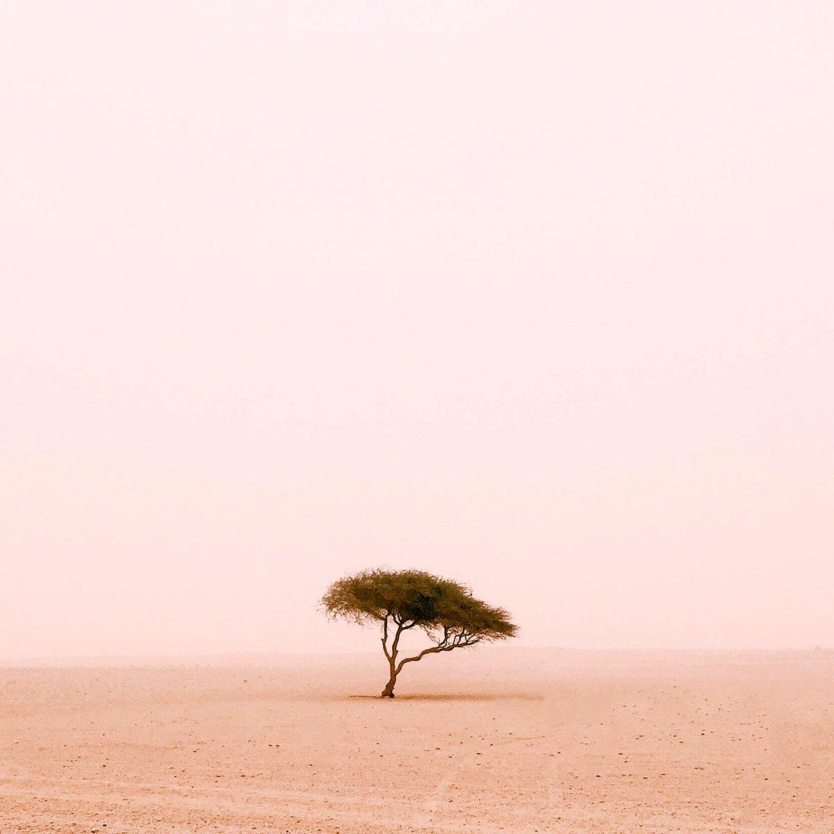 tree photos in Qatar