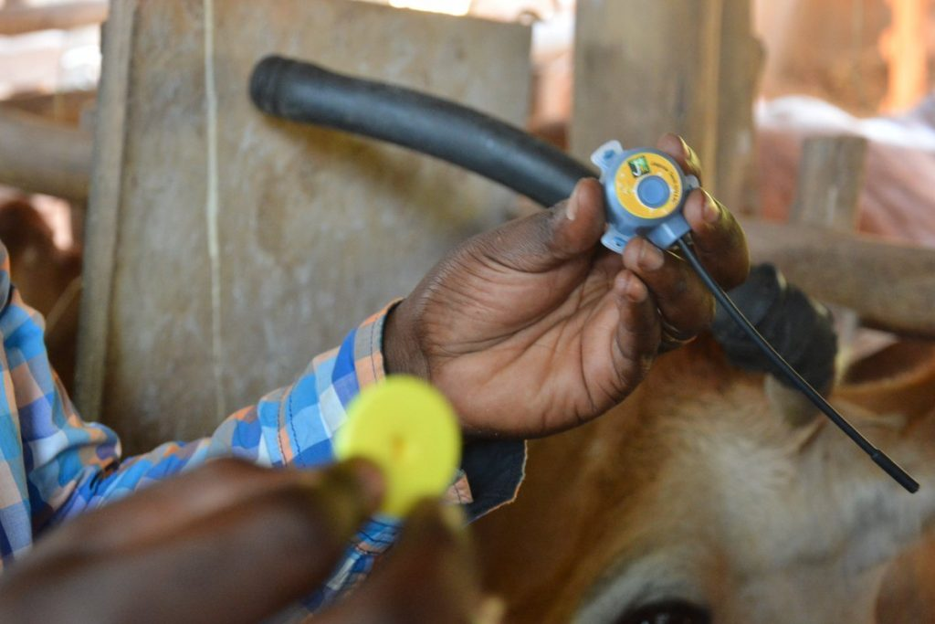 One of Jaguza's devices that is used to monitor the heart rate, respiratory rate, blood pressure of livestock. Photo by : Jaguza